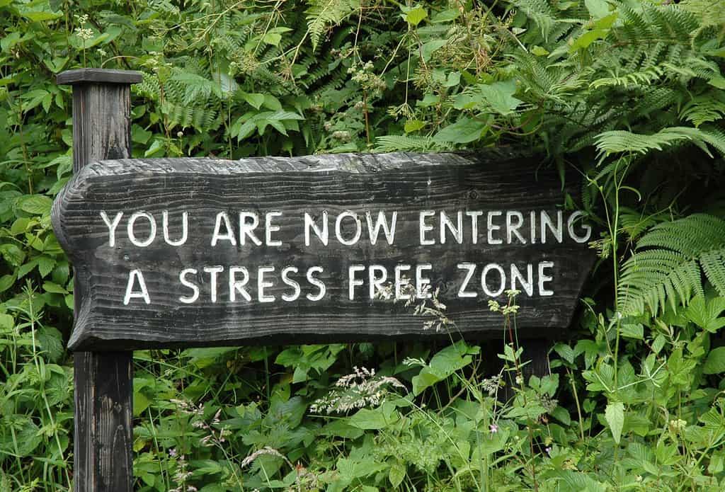 4 consejos de Mindfulness para recuperar tu centro y fundamentar tu ser